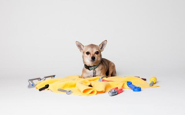 Dogs love DIY (and being warm)