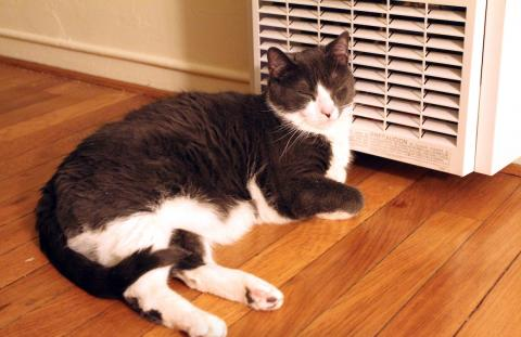 Cats and heaters, which is better?